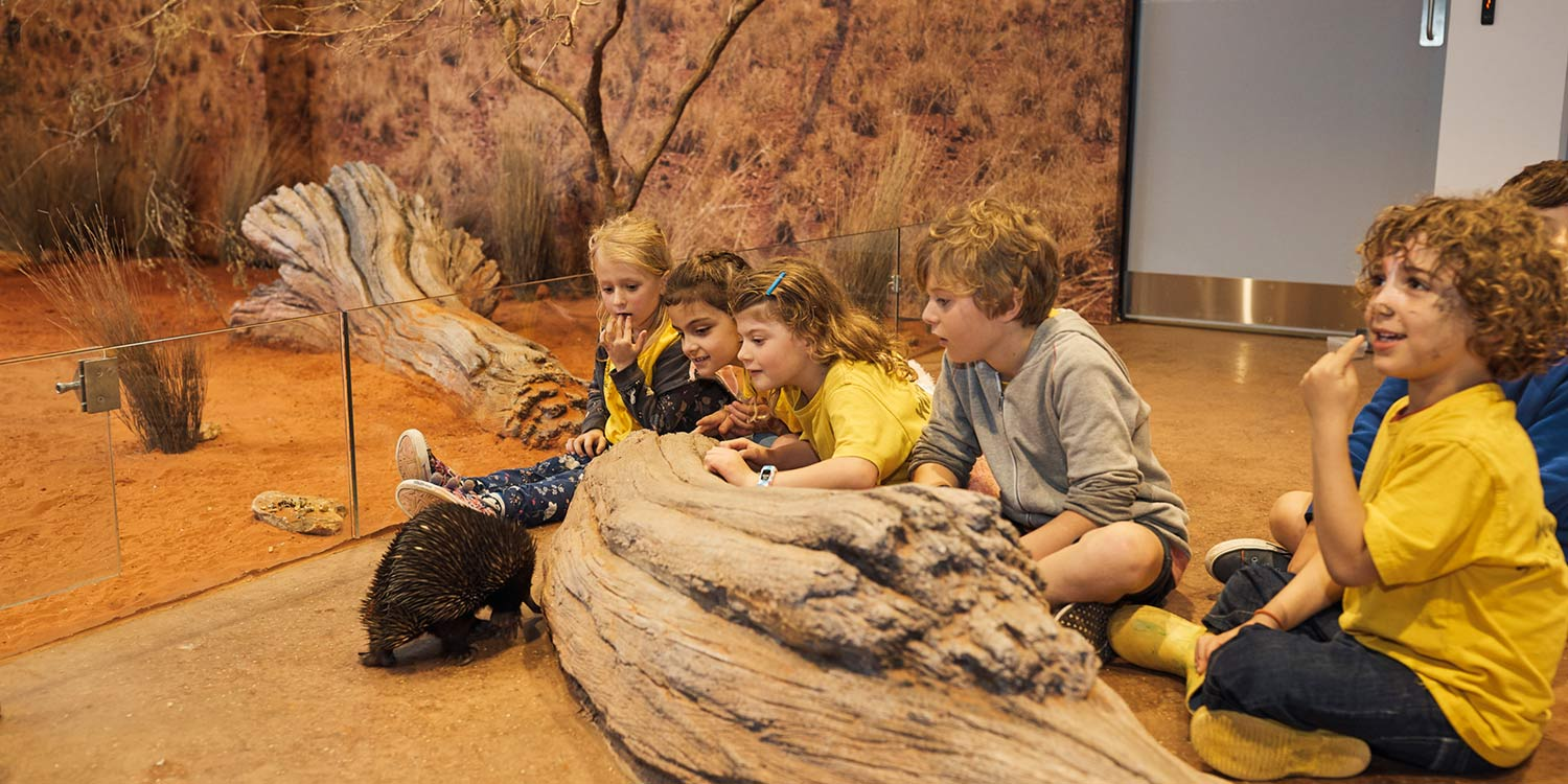 Students observing an Echidna in the Desert Classroom
