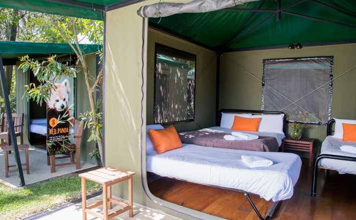 Take a peek inside the Roar and Snore tents