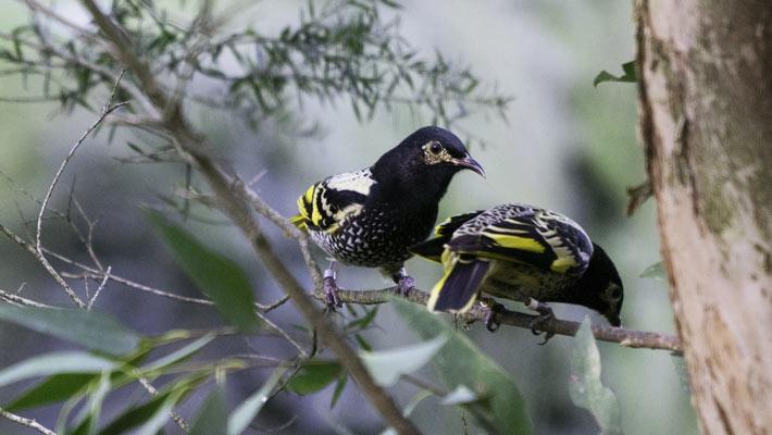Our Animals | Taronga Conservation Society Australia