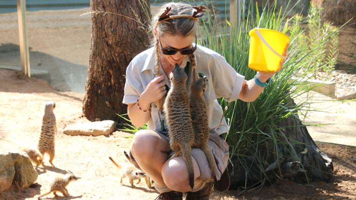 Keeper Courtney Mahony prepares to feed the Meerkats