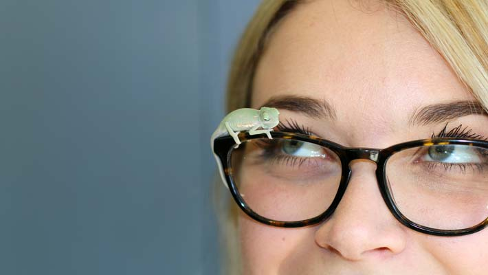 Reptile keeper Emma Bembrick shows off some newly hatched Veiled Chameleon hatchlings