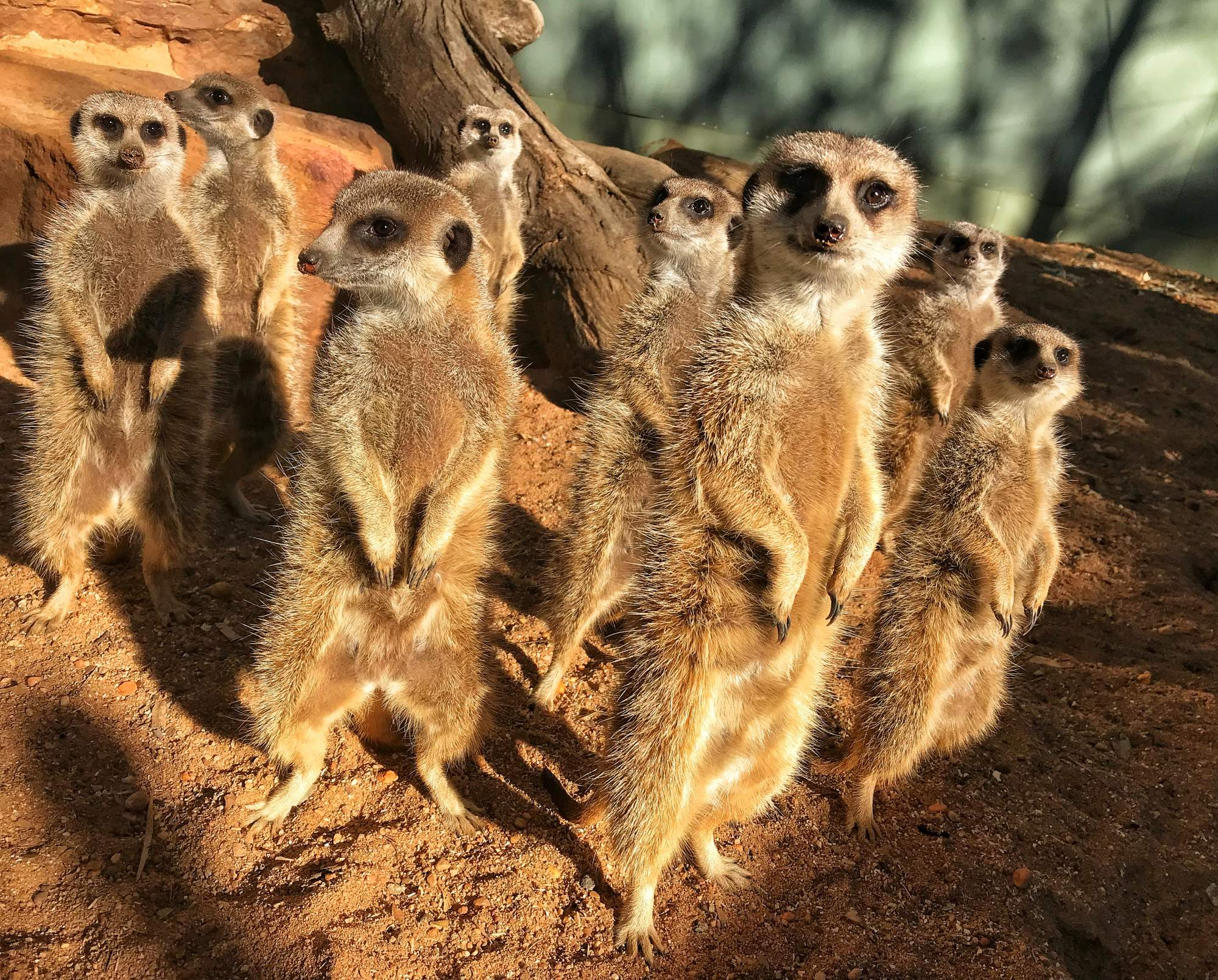 World Meerkat Day Photo: Karen James
