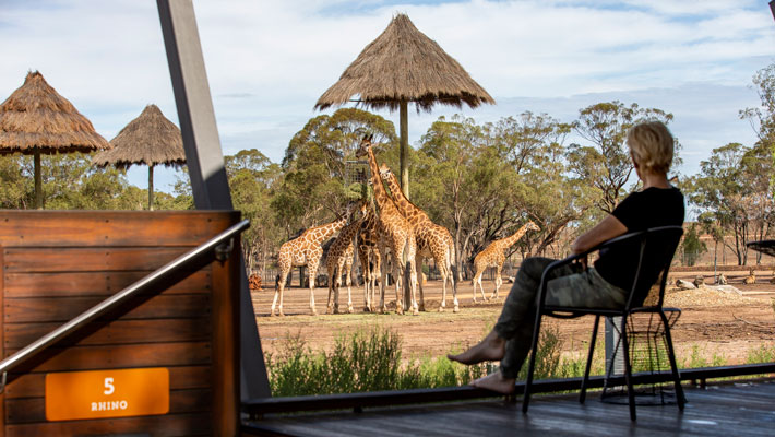 Wake up to the wild in an Animal View Room at the Zoofari Lodge.