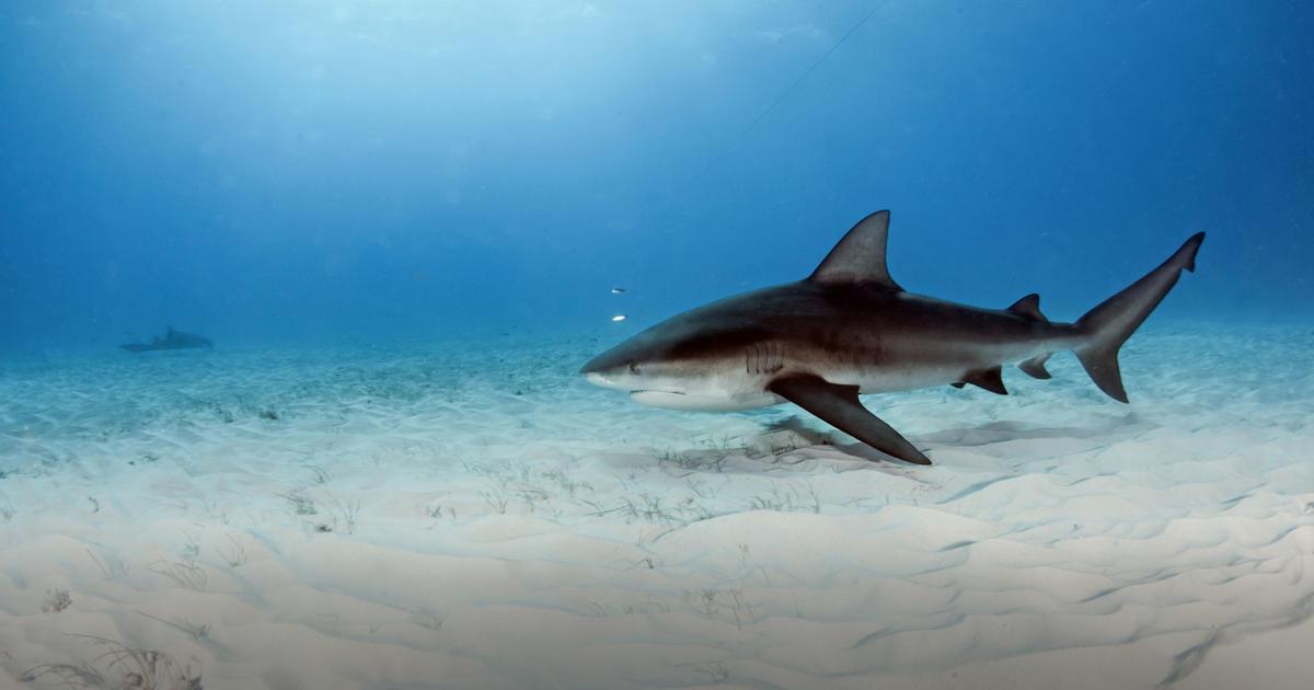 shark know how taronga conservation society australia