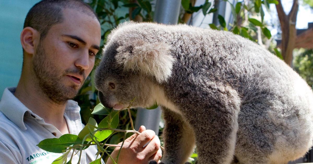 Certificate Courses | Taronga Conservation Society Australia