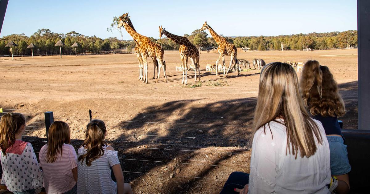 Zoofari Lodge | Taronga Conservation Society Australia