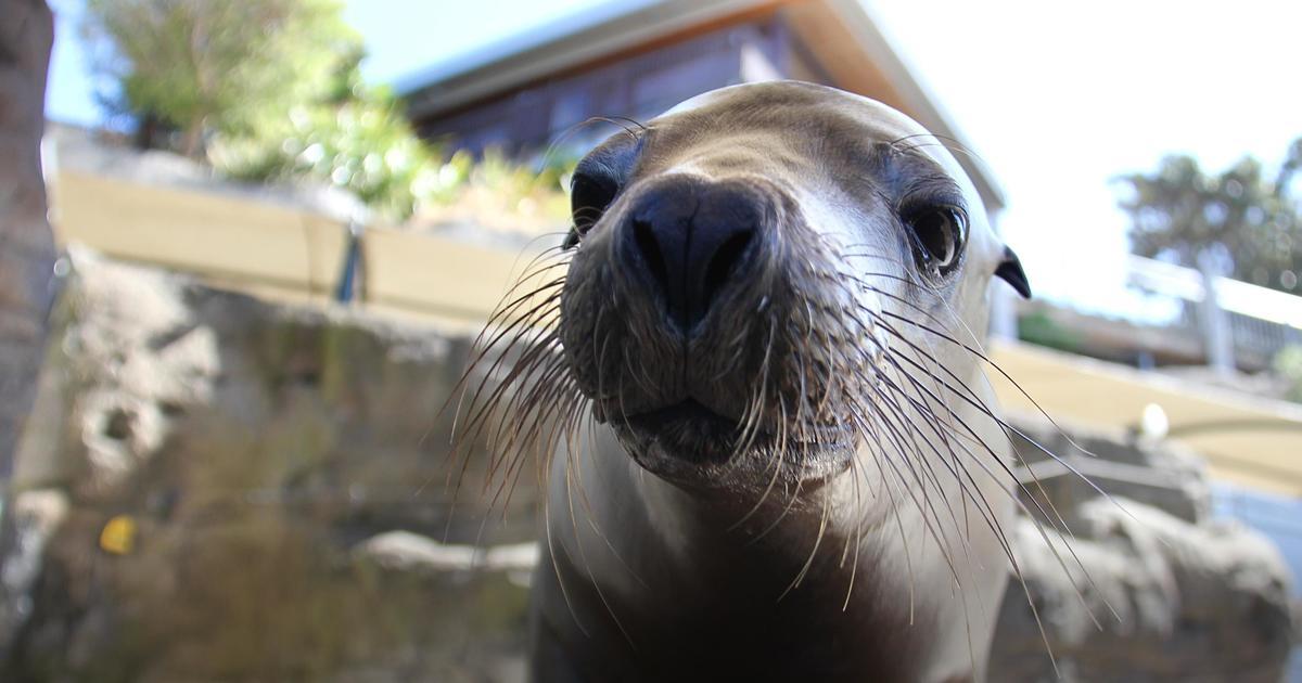 Seal Show | Taronga Conservation Society Australia