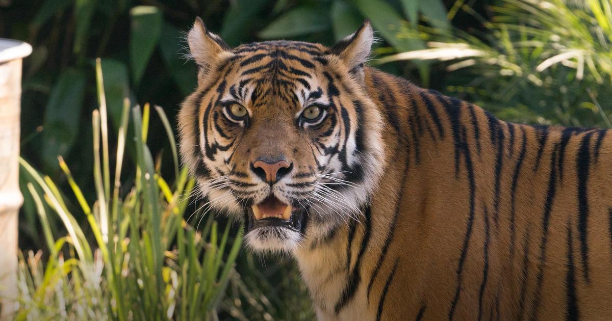 Visitor Information | Taronga Conservation Society Australia