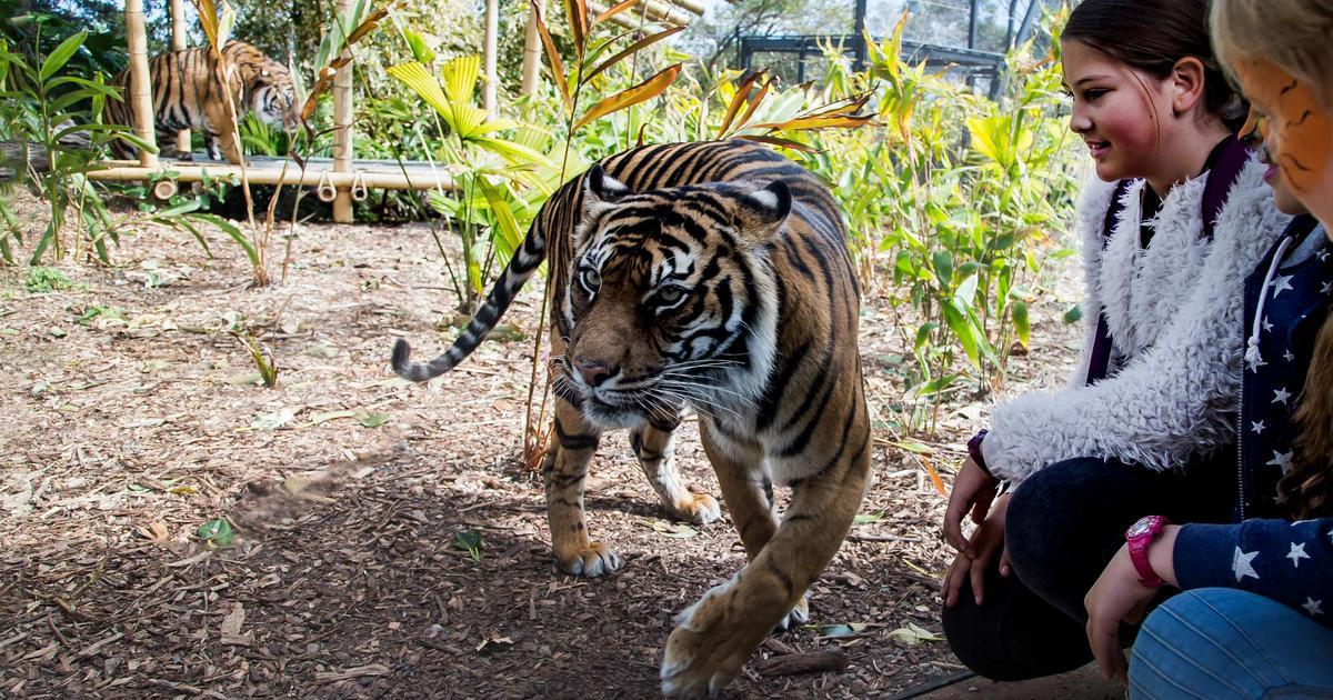 Tiger Trek | Taronga Conservation Society Australia