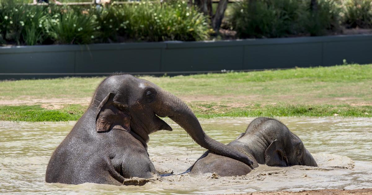 Zoo animals beat the heat | Taronga Conservation Society Australia